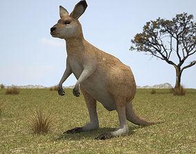 3D model Eastern Grey Kangaroo Joey