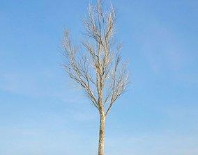 Bare Fraxinus Tree 3D model