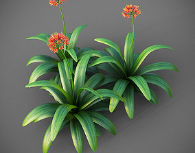 XfrogPlants Bush Lily - Clivia Miniata 3D model