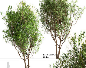 3D model Set of Salix Alba or White Willow Trees - 2
