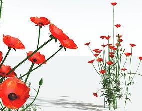 3D EVERYPlant Field Poppy 10 --20 Models--