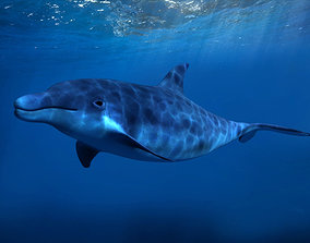 Dolphins Marine Fish marine life 3D model