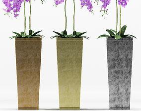 Plants 217 3D