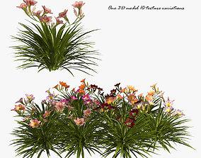 3D model Daylilies Flowers
