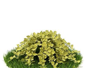 Creeper Spreading Plant 3D