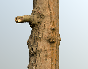 Thin oak tree trunk 3D model
