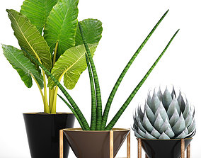 3D Collection tropical plants 30