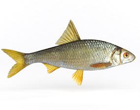3D model catch Roach Fish