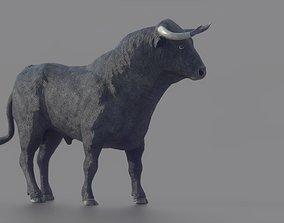 3D asset Spanish Fighting Bull