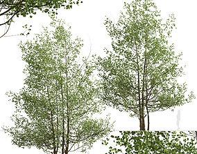 Set of Black Alder or Alnus glutinosa Trees - 2 Trees 3D