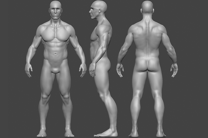 Anatomy_08_01.png