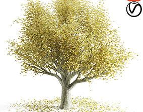 3D Autumn beech