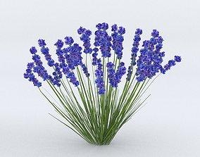 Lavender Plant 01 3D model