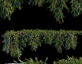 3D Grevillea Royal Mantle creeper 5 module