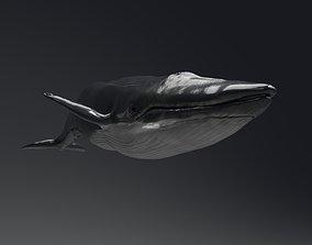 Blue Whale whale 3D model