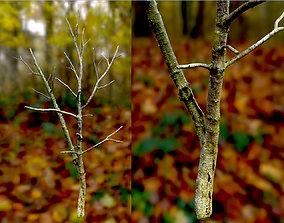 3D asset Autumn Dry Cherry Tree Scan Full-Size