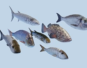 Collection of 7 photorealistic fishes 3D model