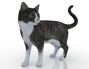 cat Domestic Cat v2 3D