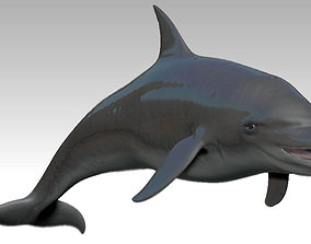 3D model VR / AR ready Rigged dolphin