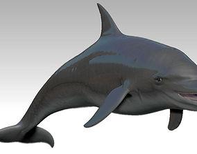 3D model VR / AR ready Rigged dolphin