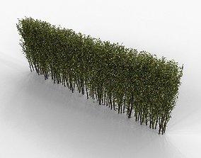 hedge Hedge 3D