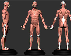 anatomy for sculptor 3D printable model
