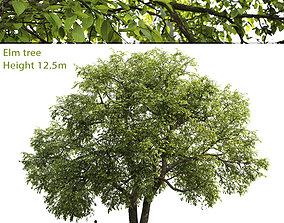 3D model Elm-tree 01