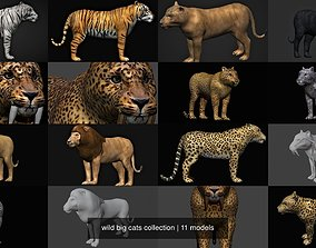 wild big cats collection 3D model