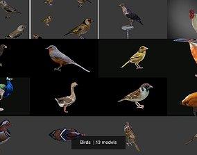 3D model PBR Birds