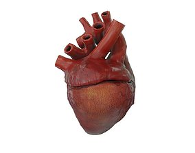 3D model Rigged and Animated Low Poly Human Heart