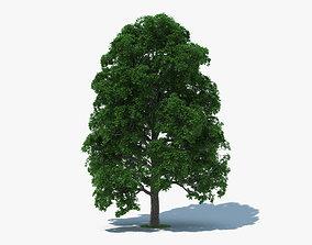 3D White Oak Tree
