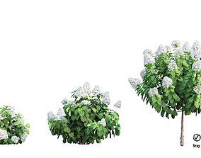decoration Plants Hydrangea set 11 3D model