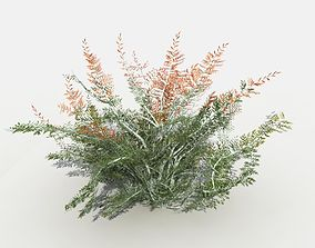 3D Desert Tamarisk