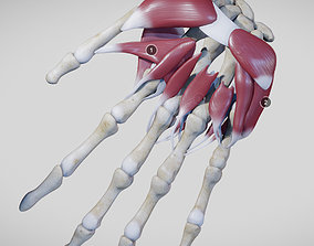 Instrinsic Muscles Of The Hand 3D model
