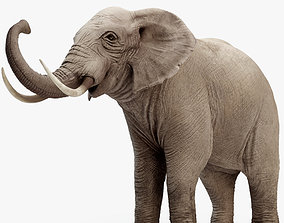rigged Rigged Elephant model 8K
