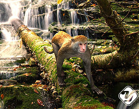 Taiwan Monkey 3D model for 3ds Max animated game-ready
