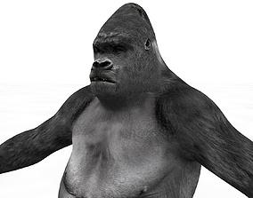 3D model Mountain Gorilla Rigged