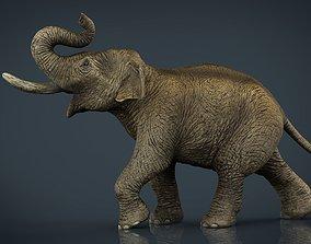 3D model Asian Elephant