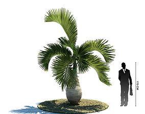 3D model Hyophorbe Lagenicaulis Tropical Tree