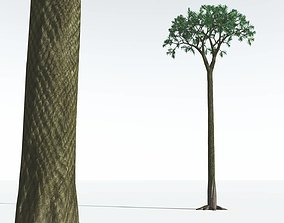 3D EVERYPlant Spiny Scale Tree 05 --15 Models--