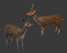3D model Deer Couple - Stag and Doe