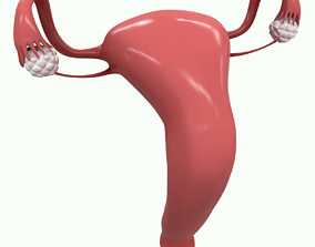 Female Reproductive System Section 3D model