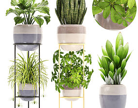 3D model schefflera Collection plants