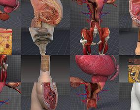 3D model Complete Pelvic Organs