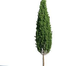 3D Quercus robur 51 am154