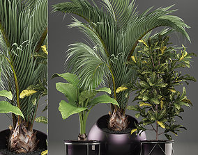 Decorative plants in flower pots for the interior 468A 3D