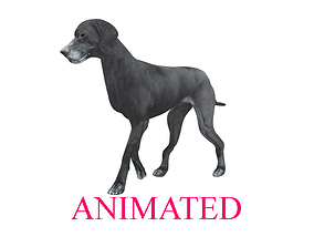 3D asset Walking cycle animated lowpoly Labrador Retriever