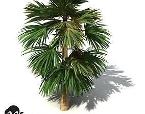 3D XfrogPlants Hillebrand Palm