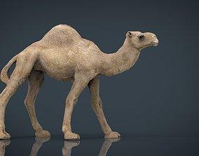 3D asset Camel