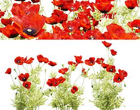 Field poppy 3D model